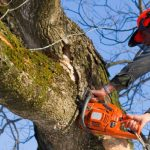 Pros and Cons of Tree Trimming Services in Lancaster PA